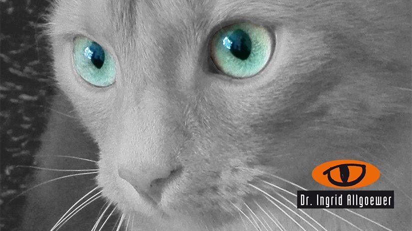 Augen Tierarztpraxis Allgoewer