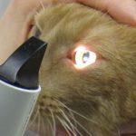 Augenuntersuchung Tierarztpraxis Allgoewer