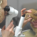 Augenuntersuchung Augen Tierarztpraxis