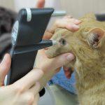 Tonometrie - Augeninnendruckmessung