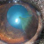 pigmentierenden Hornhautentzündung