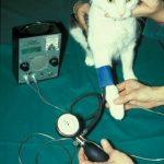 Blutdruckmessung bei einer Katze