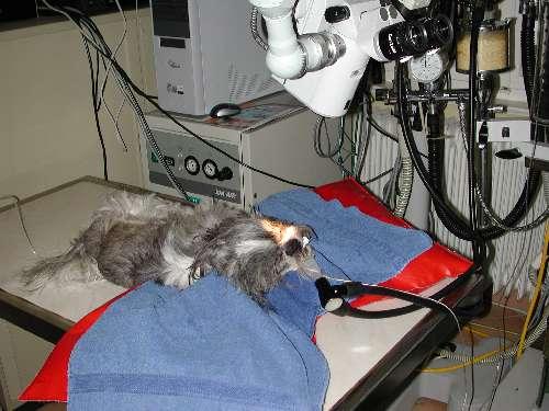 Augenoperation Augen Tierarztpraxis