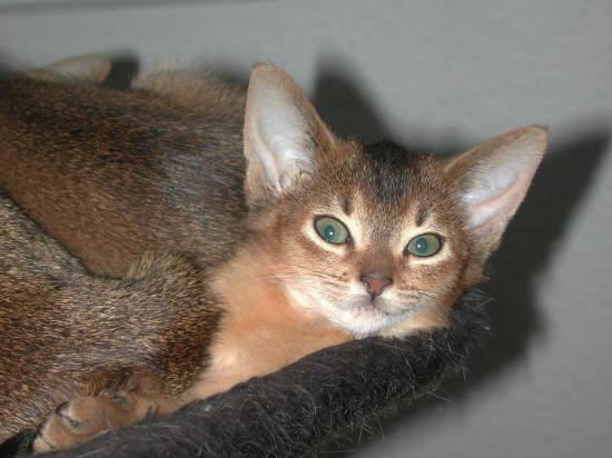 Augenerkrankungen bei Babykatzen
