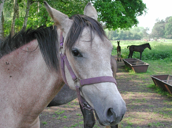 Augenerkrankungen bei Pferden