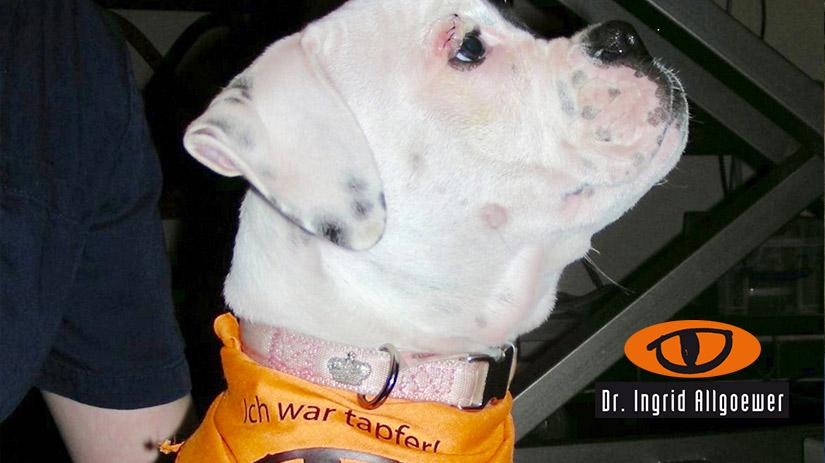 Banner Image Hund Tapfer