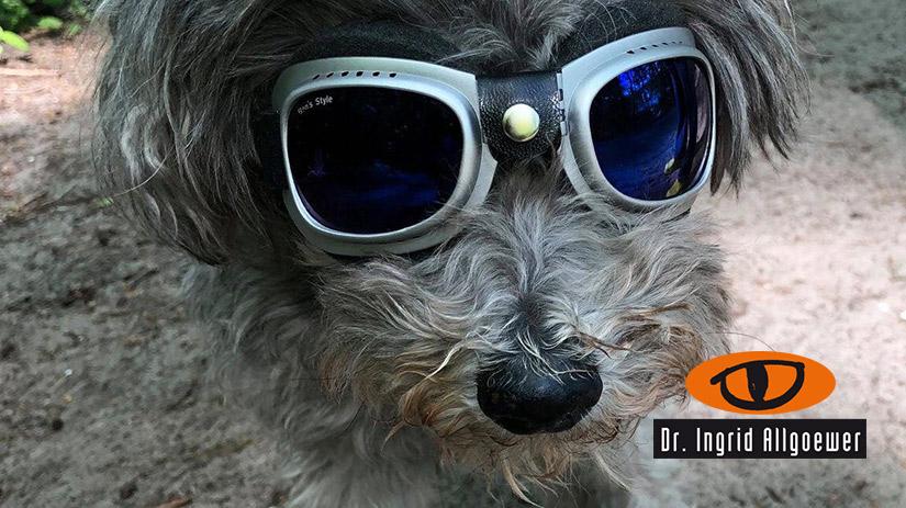 Banner Image Hund